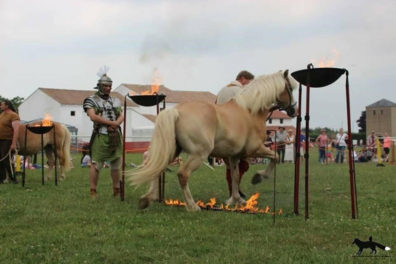 Darstellung Pferdeausbildung, römischer Reiter, Xanten